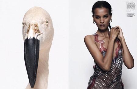 POP MAGAZINE Liya Kedebe in Pop Lady by Sean & Seng. Tamara Rothstein, Fall 2011, www.imageamplified.com, Image Amplified (2)