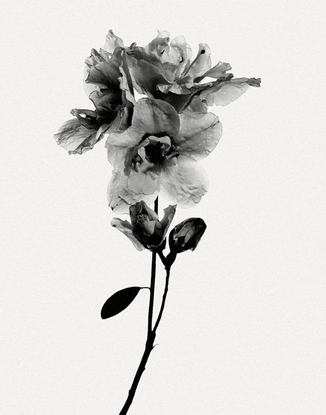FLAUNT MAGAZINE Fernanda Ly by Yu Tsai. Martina Nilsson, May 2015, www.imageamplified.com, Image Amplified (3)